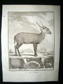 Buffon: C1770 Deer Pig, Antique Print